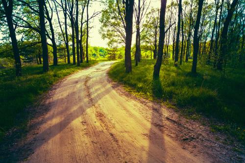 Viele Wanderwege laden ein zum abschalten